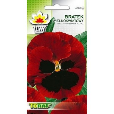 Pansy red with blotch