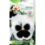 Pansy white with blotch
