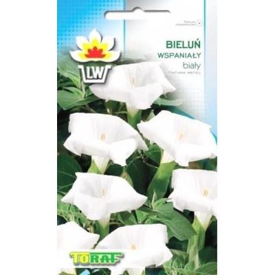Datura Gorgeous white