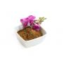 Guarana met een bloem 1