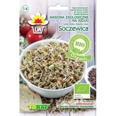 BIO Sprout seeds lentils