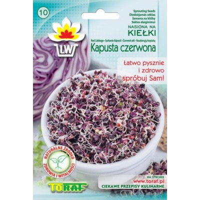 Sprout seeds red cabbage
