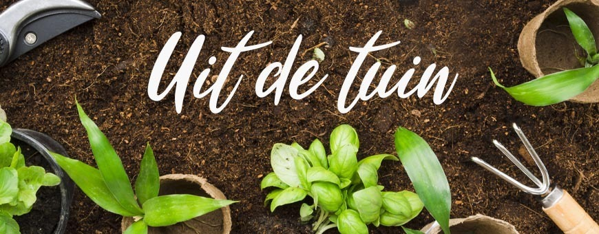 Goedkope gezonde gedroogde fruit, groenten en bloembladen | ietsGezond.nl
